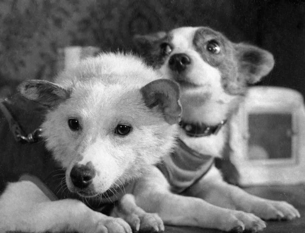 بلکا و استرلکا، سگ های فضانورد شوروی