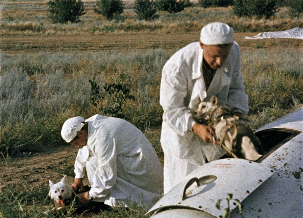 پزشکان سگ های فضانورد را از کابین موشک بیرون می آورند