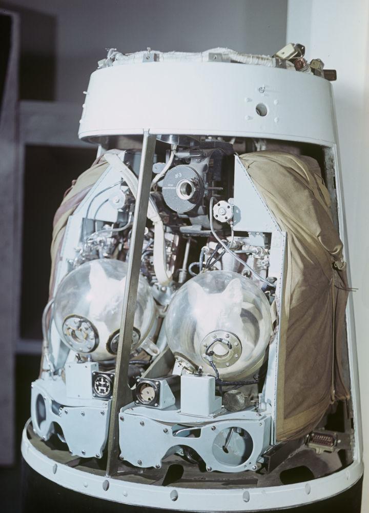 ماکت کابین بلکا و استرلکا، سگ های فضانورد در سفینه فضایی