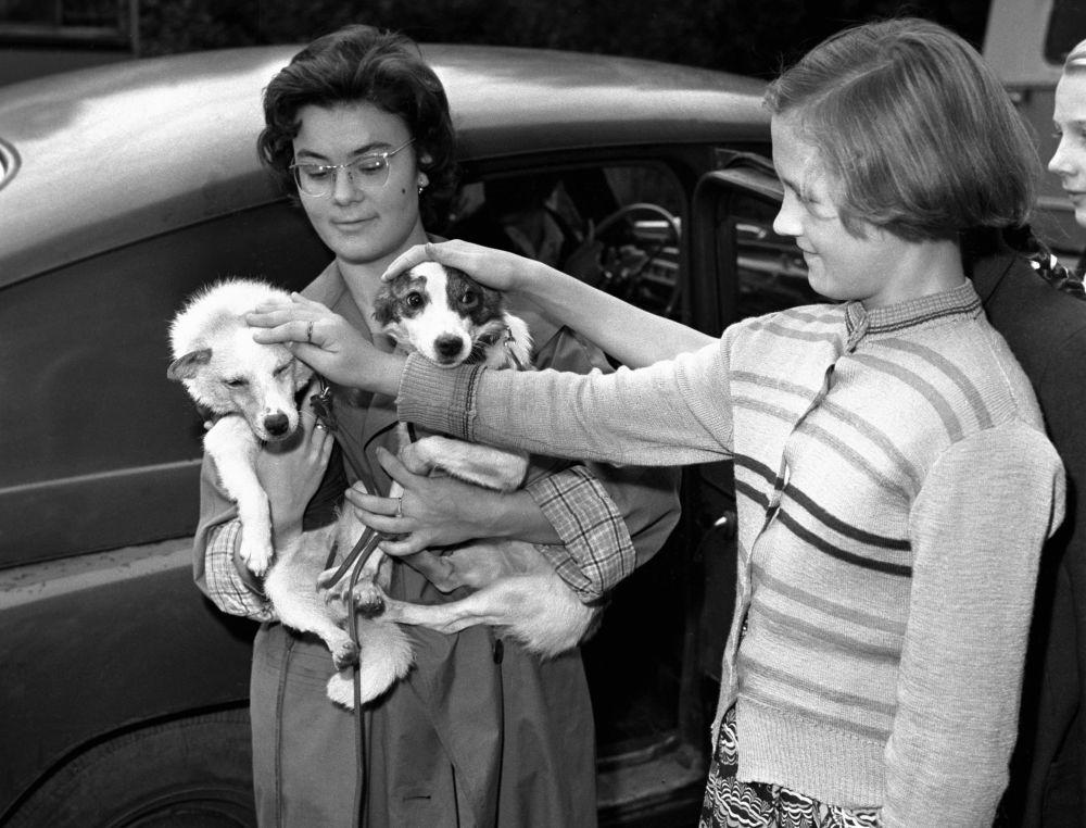 دو دختر بلکا و استرلکا، سگ های فضانورد شوروی را نوازش می کنند، سال 1960