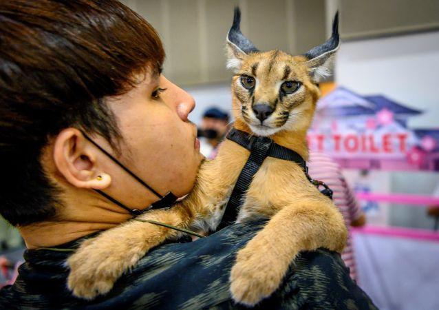 نمایشگاه جانوران اهلی و وحشی در بانکوک