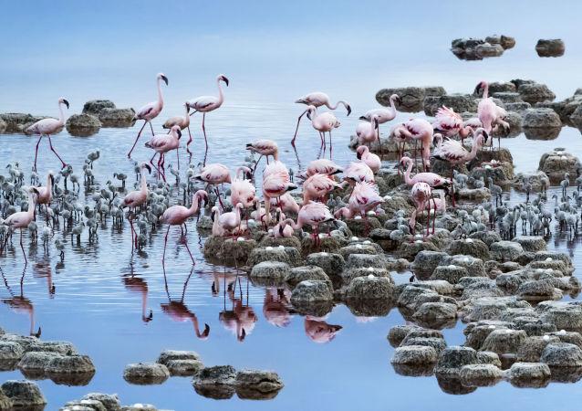 فینالیستهای مسابقه عکاسی گردشگری نشنال جئوگرافیک  عکاس، تونی جانگ