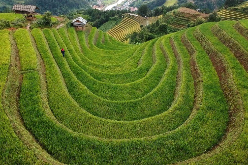 مزارع برنج پلکانی ویتنام