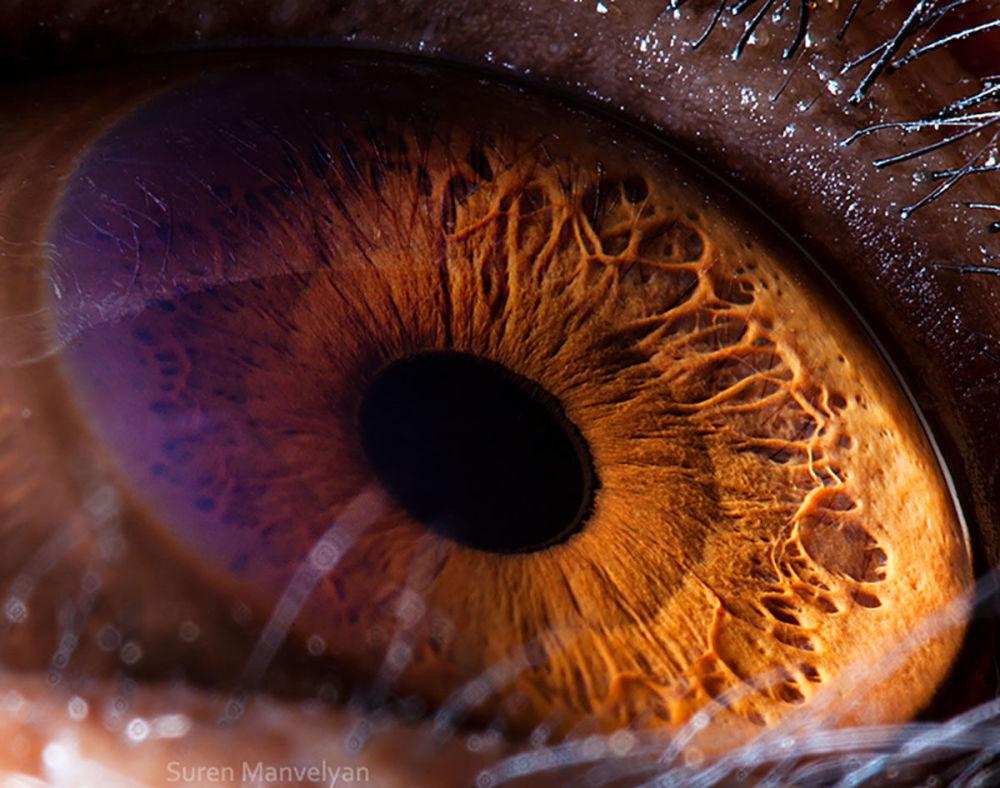 دنیایی زیبا در درون چشمان حیوانات در عکس های سورن مانولیان، عکاس ارمنی چشم شمپانزه