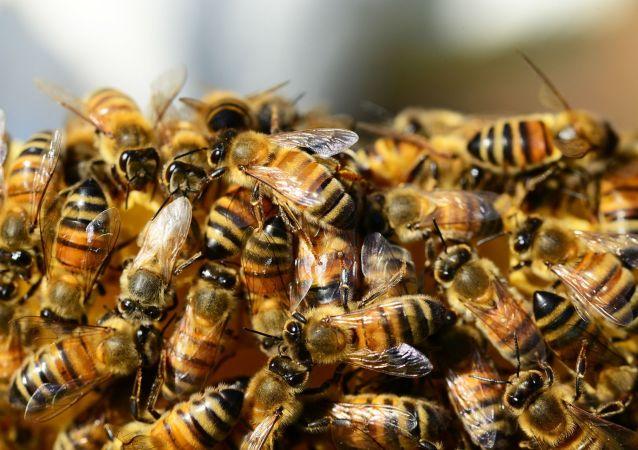 مردی با 63 کیلوگرم زنبورزنده تمام بدن خود را پوشاند و به تاریخ پیوست