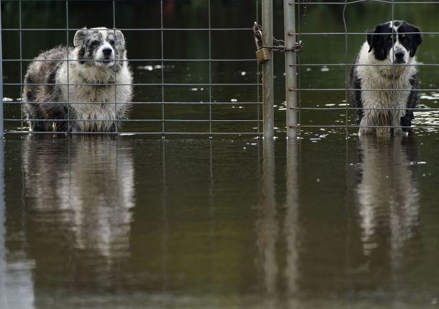 پیادمدهای طوفان اتا و بارش های سنگین در فلوریدا