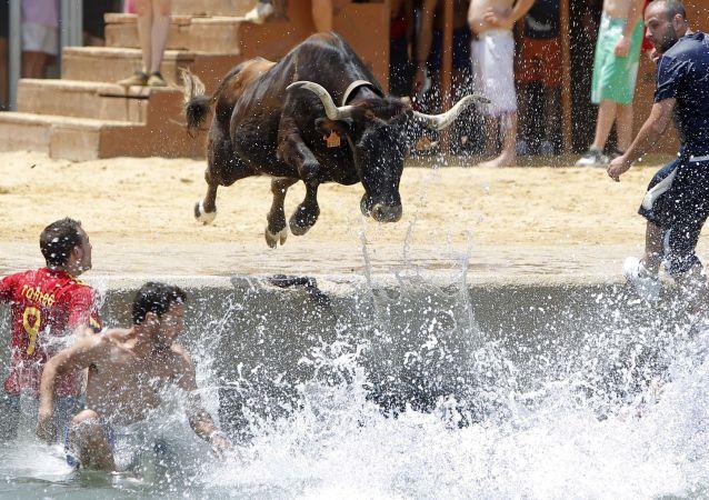 نقش گاو در سنن کشورهای جهان فستیوال اسپانیا