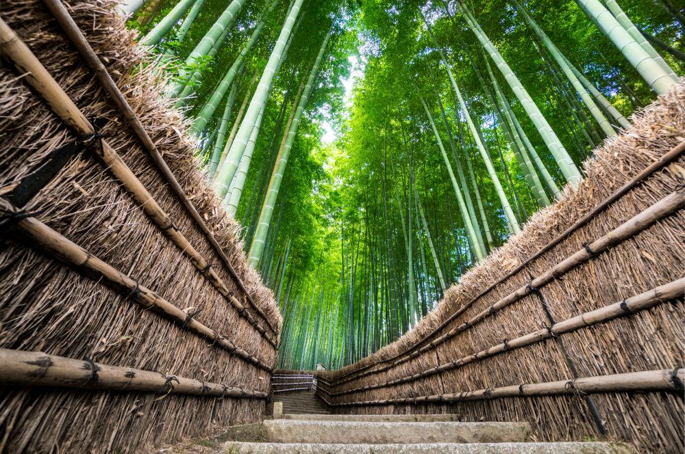 نوای طبیعت سبز درمان استرس کرونایی جنگل بامبو ژاپن