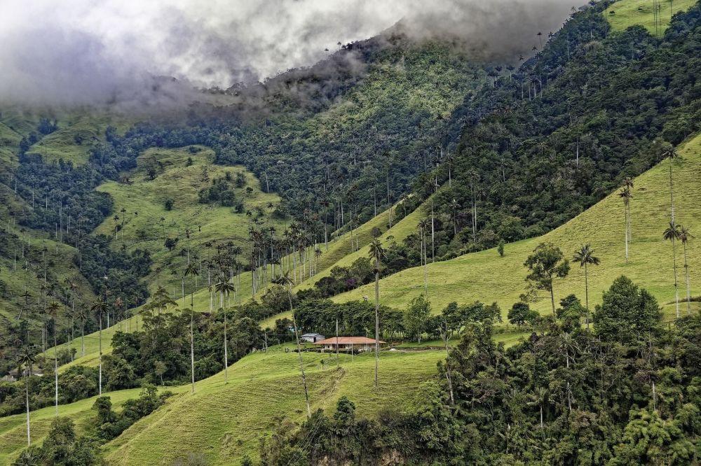 نوای طبیعت سبز درمان استرس کرونایی دره کوکورا در کلمبیا
