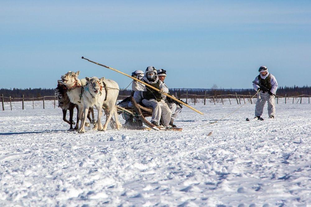 آموزش توسعه شیوههای سنتی حمل و نقل به مردم بومی منطقه مورمانسک