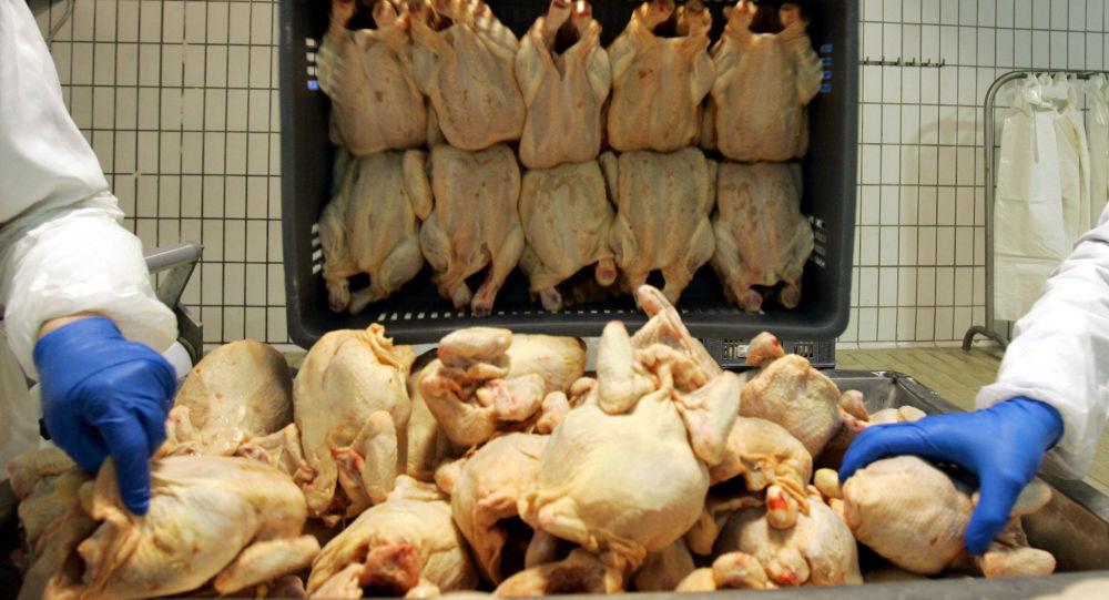 هشدار دانشمندان نسبت به خطر شیوع آنفلوانزای مرغی