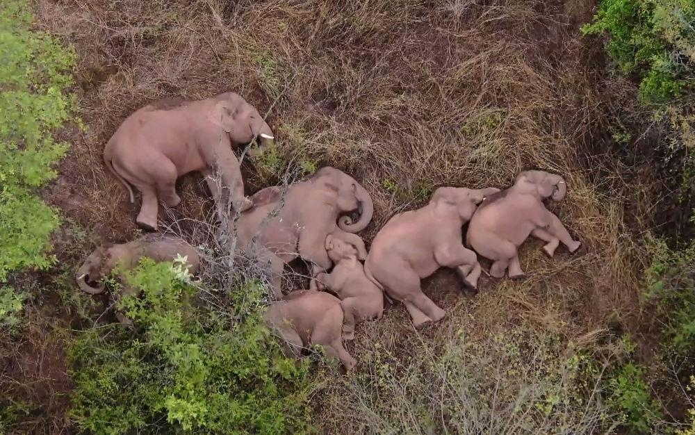 رویدادهای هفته به روایت تصویر استراحت فیل ها در چین