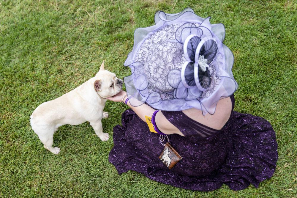 نمایش سگ «وستمینستر کِنِل کلاب» در نیویورک