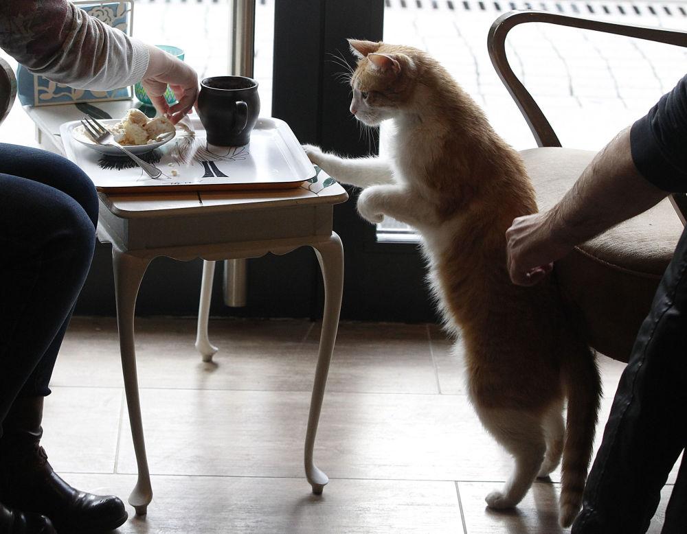 نوشیدن چای و قهوه همراه حیوانات کافه ورشو