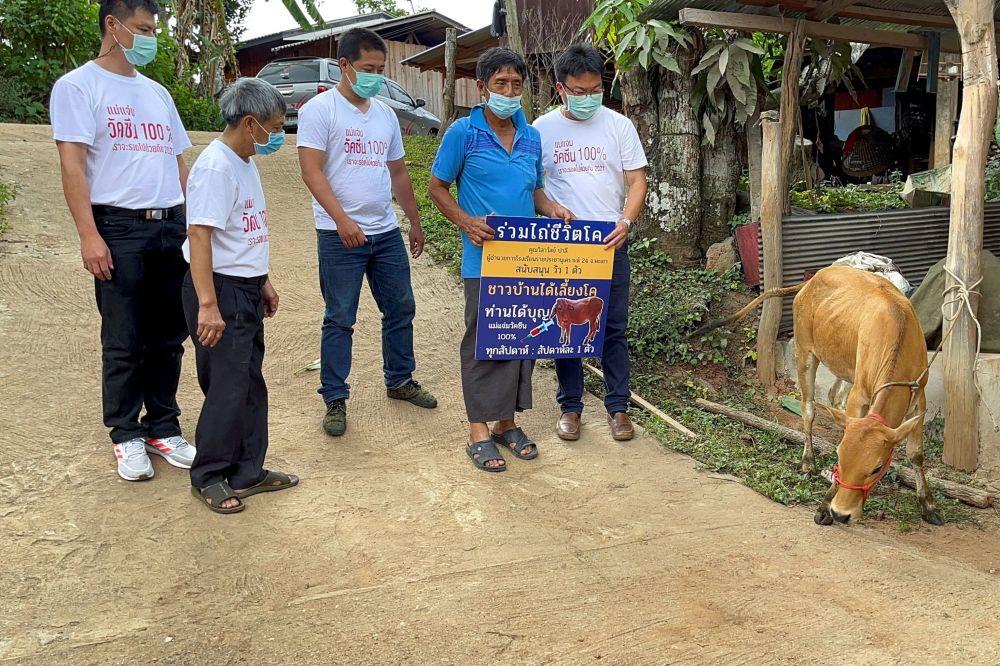 جوایز واکسن زدن در کشورهای جهان اهدای گاو زنده در تایلند