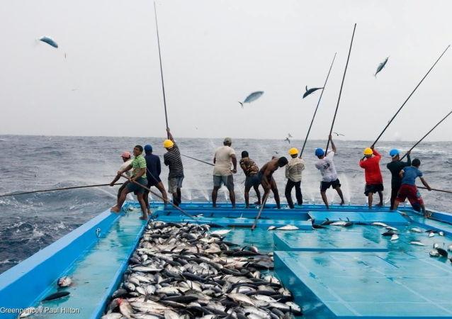 کشف جسد صدها موجود دریایی در ساحل اقیانوس آرام