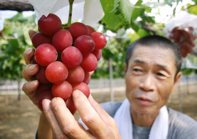 فروش یک خوشه انگور در ژاپن به  مبلغی باورنکردنی