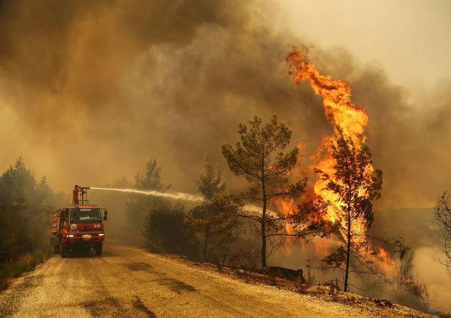 اعلام علت احتمالی آتشسوزیهای جنگلی در ترکیه