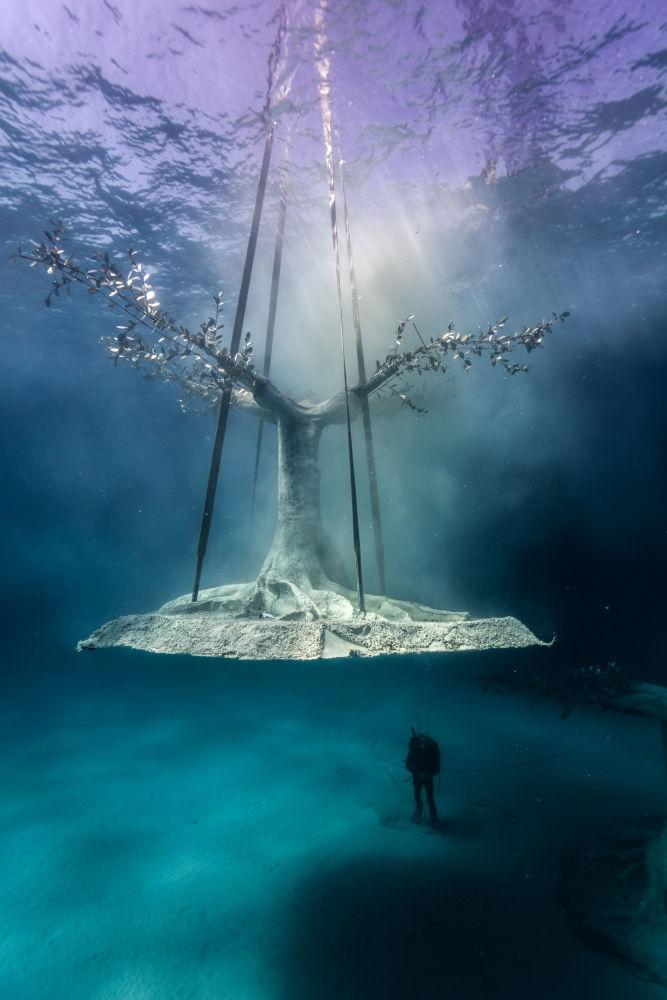 Установка дерева в музей подводной скульптуры Musan у пляжа Пернера в Айя-Напе, Кипр