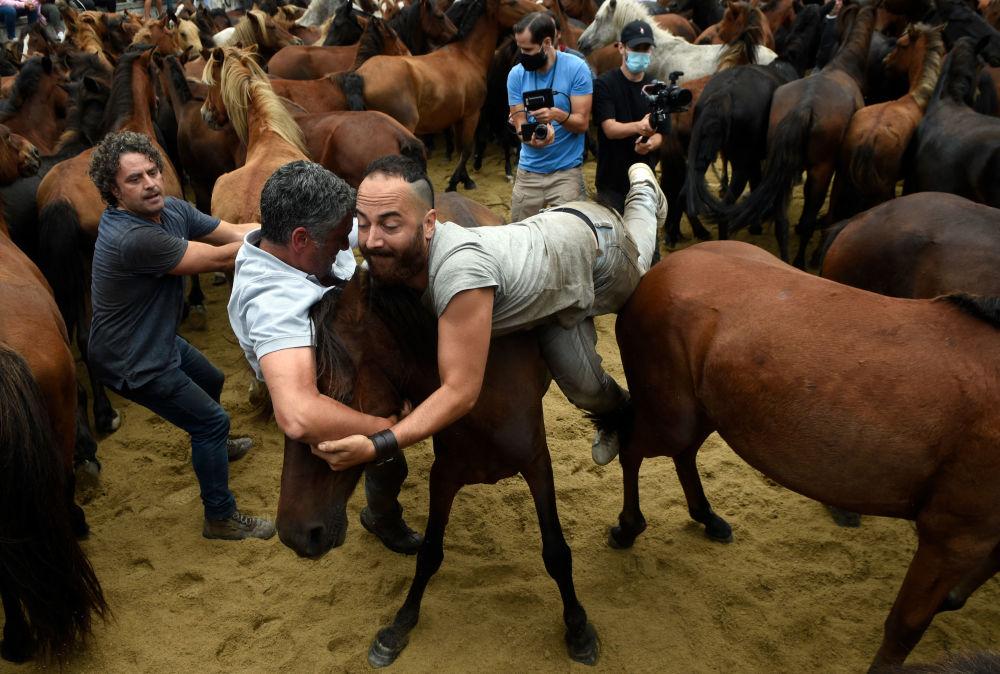 رویدادهای هفته به روایت تصویر اسب های وحشی اسپانیا