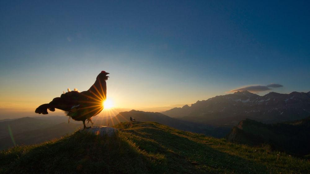 برندگان مسابقه عکاسی پرنده-2021 انتخاب شدند عکاس، لوی فیتز از سوئیس، آغاز روشنایی