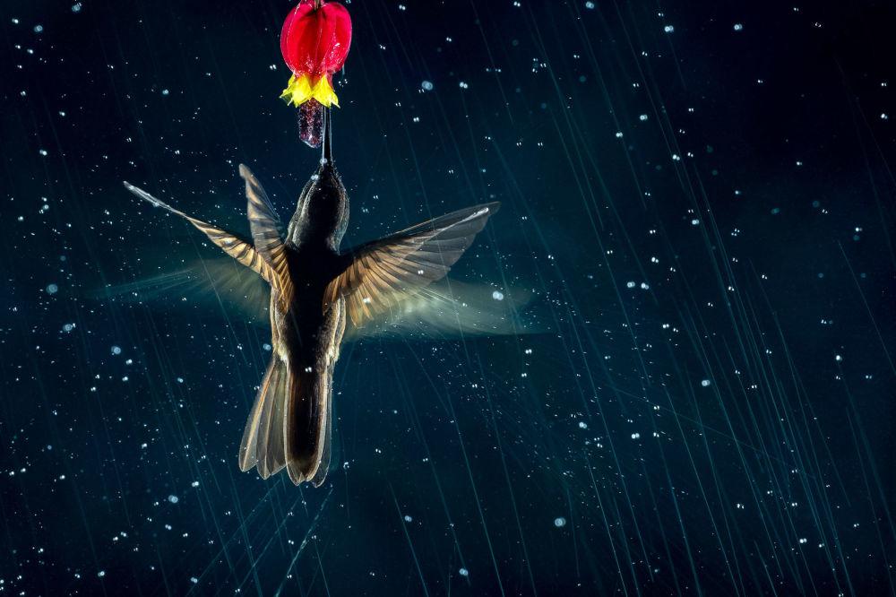 برندگان مسابقه عکاسی پرنده-2021 انتخاب شدند عکاس، نیکولاس روسنز از اسپانیا، هنر پرواز