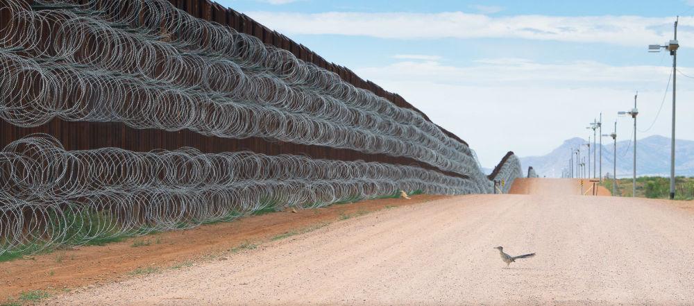 برندگان مسابقه عکاسی پرنده-2021 انتخاب شدند عکاس، الخاندرو پیریتو از مکزیک، پشت دیوار