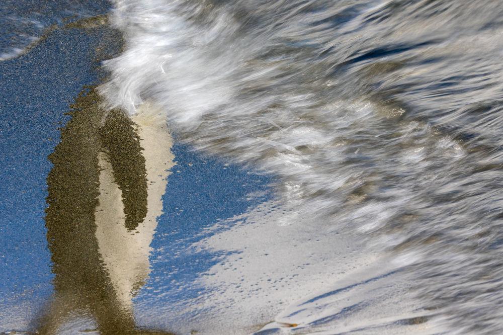 برندگان مسابقه عکاسی پرنده-2021 انتخاب شدند عکاس، رافائل آرمادا از اسپانای، ناپدیدی