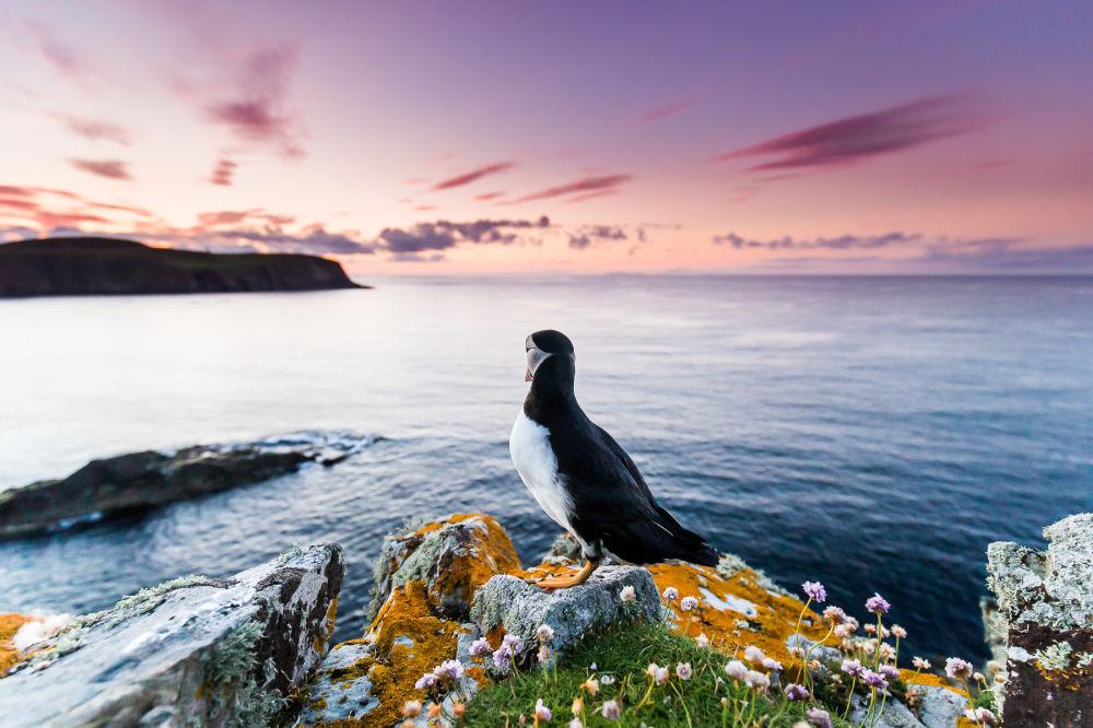 برندگان مسابقه عکاسی پرنده-2021 انتخاب شدند عکاس، کوین مورگانز از بریتانیا، غرق در فکر