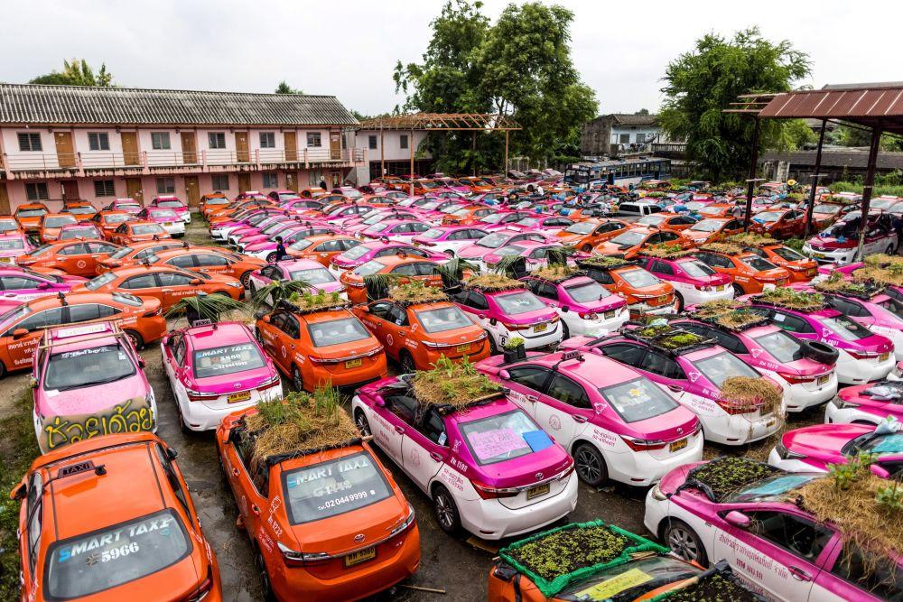 باغچه ها در سقف اتومبیل ها