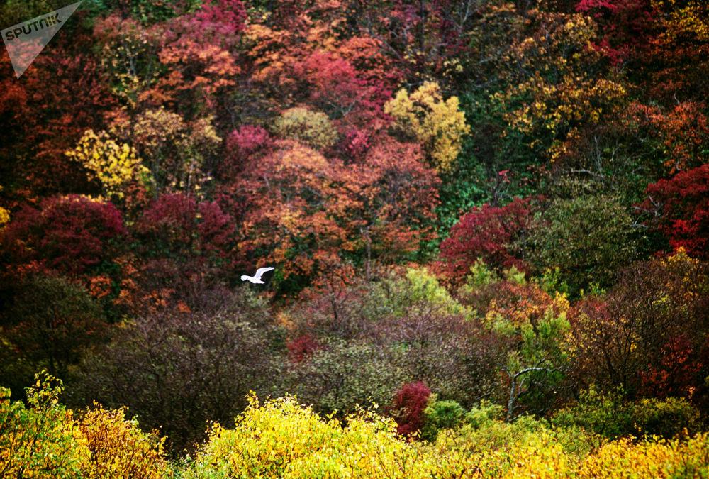 منظره پاییز در استان ساخالین
