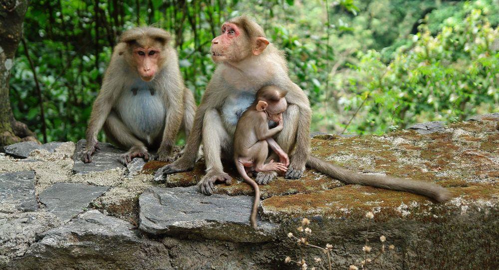 آغاز واکسیناسیون حیوانات در باغ وحش ها علیه کرونا در آمریکا