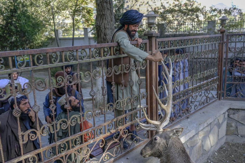 نیروهای طالبان (ممنوعه در روسیه) در باغ وحش کابل