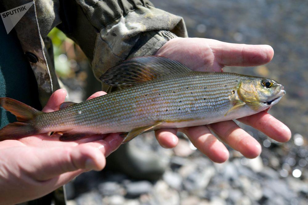 ماهیگیری در سیبری