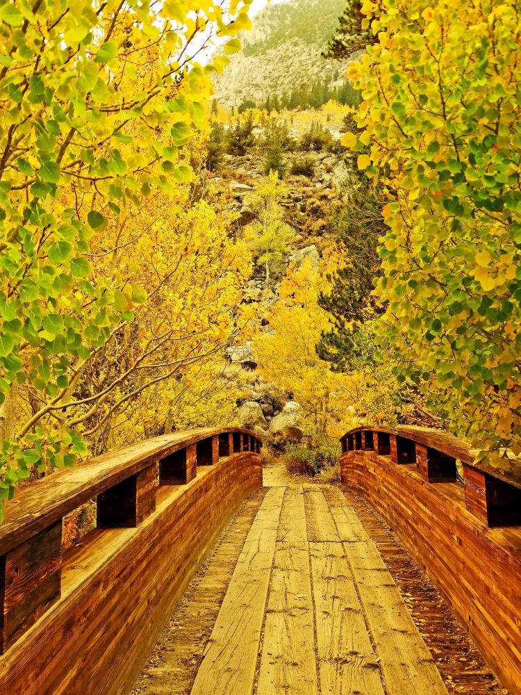 منظره ی پاییزی در کالیفرنیا