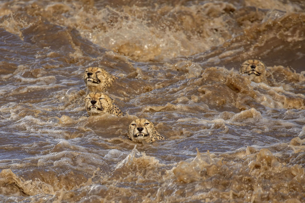 برندگان مسابقه «حفاظت از محیط زیست 2021» اعلام شدند عکاس، بودهیلینی سویز از استرالیا