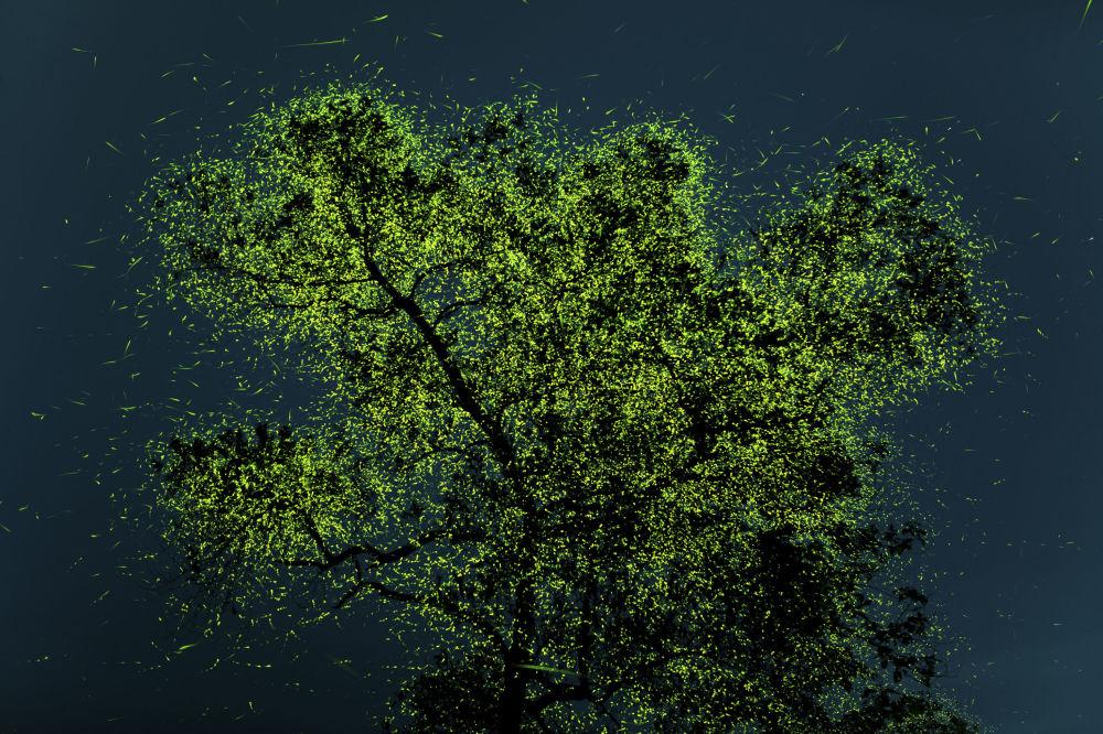 برندگان مسابقه «حفاظت از محیط زیست 2021» اعلام شدند پراتامش قادکار، عکاس هندی برنده منتخب مردمی با عکس کرم شب تاب