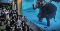 برندگان 57-مین مسابقه عکاسی «حیات وحش» 2021 میلادی  عکاس،آدام آزوِل، استرالیا، فیل غواص