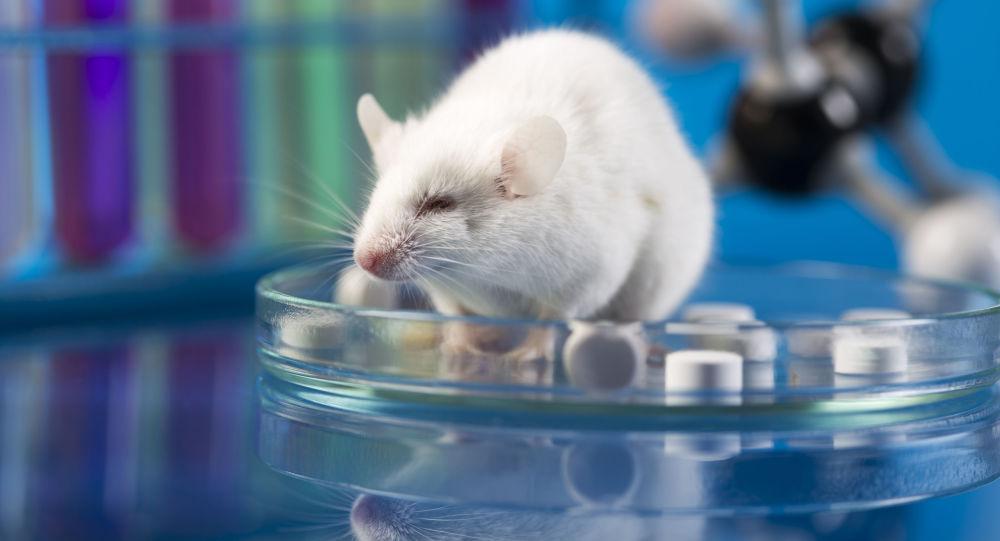 موش ها نیاز به سرگرمی دارند!