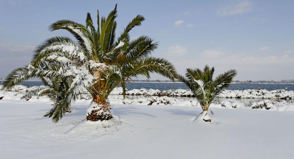 بارش برف در عربستان سعودی
