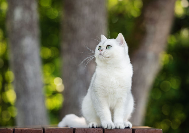 پیش بینی دیدار ایران و پرتغال توسط گربه نام آشنای روس