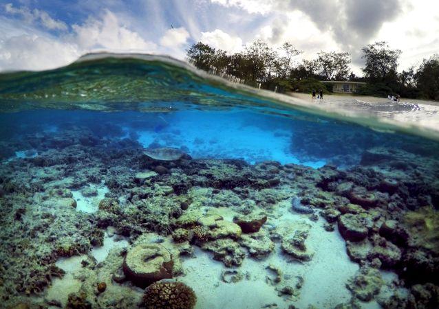 خطر نابودی سد بزرگ مرجانی در استرالیا