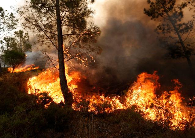 آتش سوزی مهیب جنگلی در ترکیه با بیش از 180 مصدوم