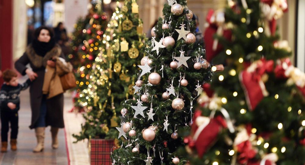 خریداران درخت کاج کریسمس در ایران  +عکس