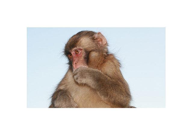 اولین چینی در اثر ابتلا به «ویروس میمونی» جان سپرد