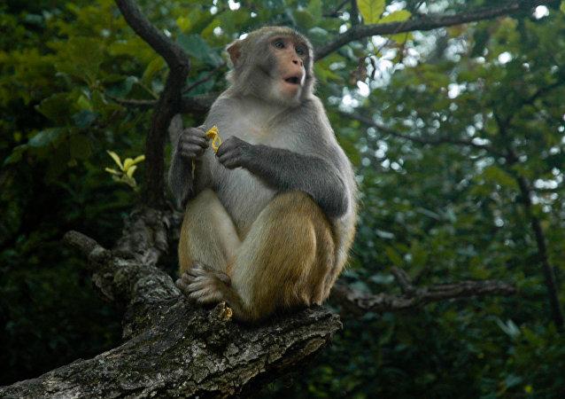 زندگی دختربچه تارزان با میمون ها (عکس)