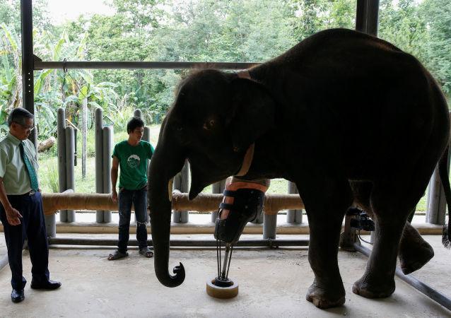یک فیل ژاپنی، کارمند باغ وحشی در ژاپن را تا سرحد مرگ زد و کشت