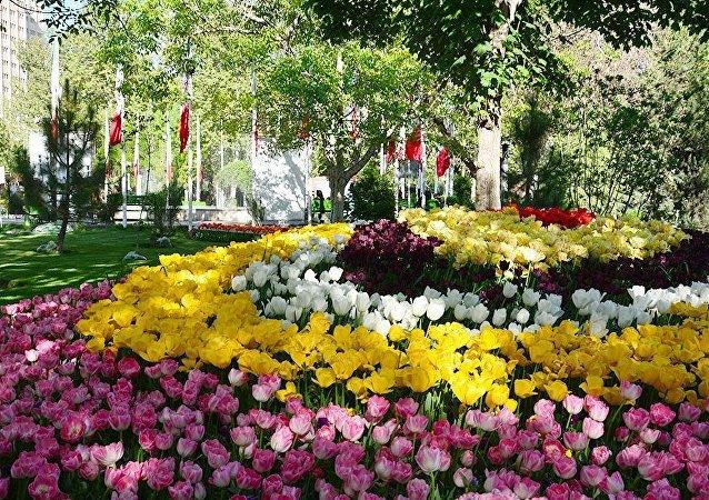 گل لاله در تهران