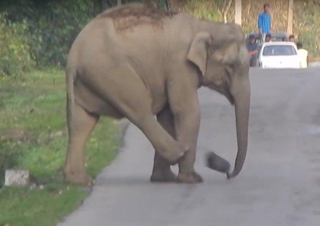 لیونل مسی فیل ها (ویدئو)