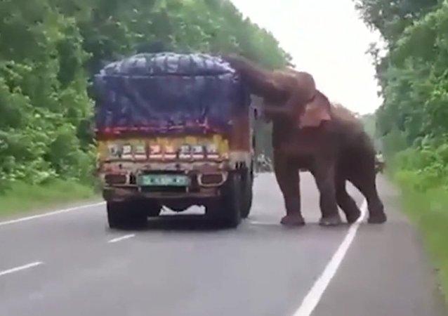 حمله فیل به کامیون باری در هند + فیلم